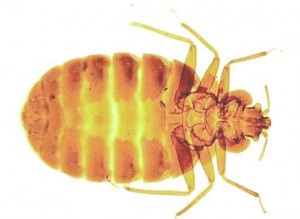Bed Bug Control Stapleford